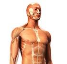 Biomécanique humaine et troubles musculo-squelettiques