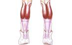 Diagnostic échographique d'un tennis leg : le coup de fouet dans le mollet…