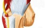 Le nerf ulnaire dans la gouttière épitrochléenne