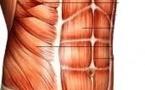 Lésion de l'enthèse chondro-costale du droit abdominal